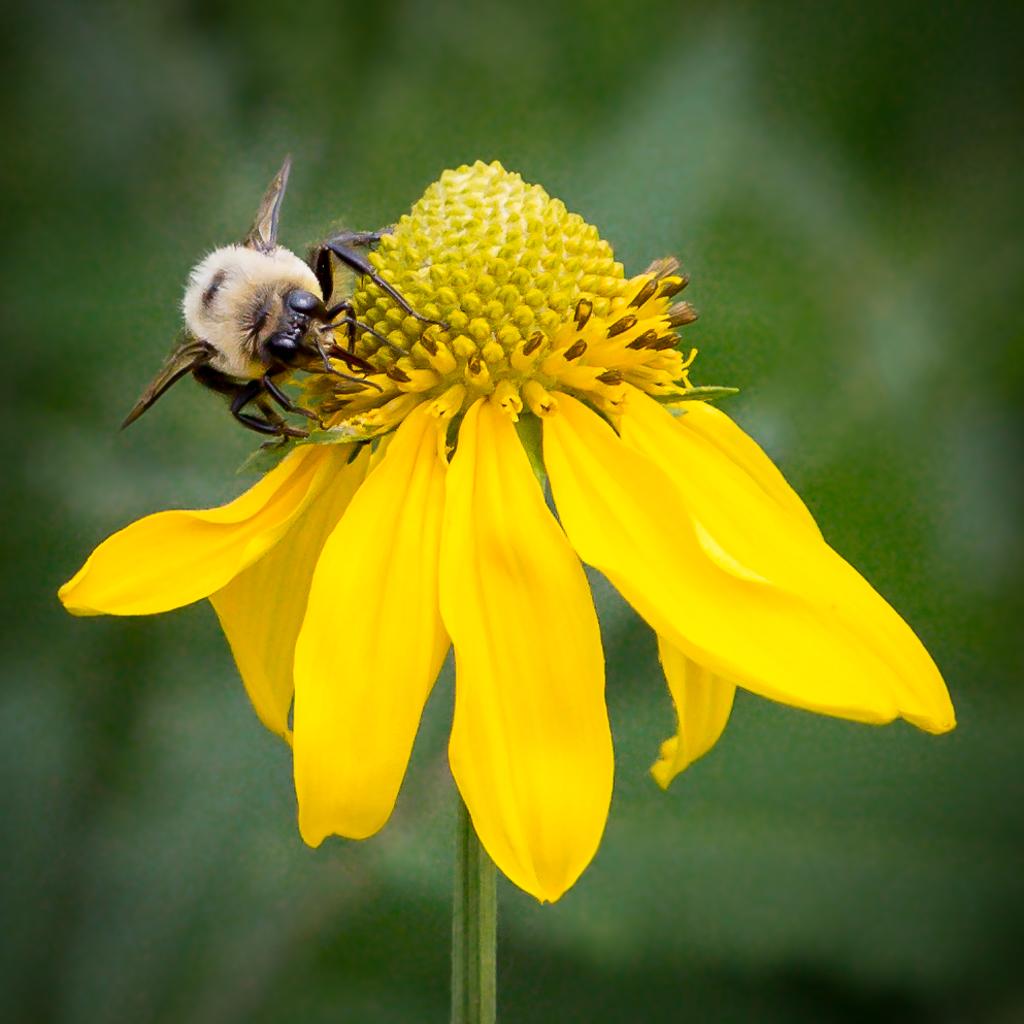 DianeA-Collecting Nectar