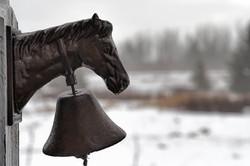 GrahamJ-Horse head