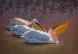 JeffF-Pelicans