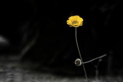 GrahamJ-Yellow flower