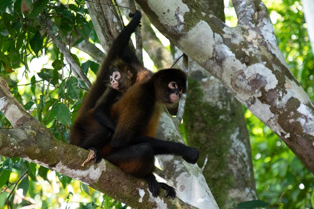 GailS_monkeys