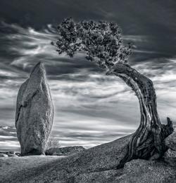 GlennJ - Juniper Rock