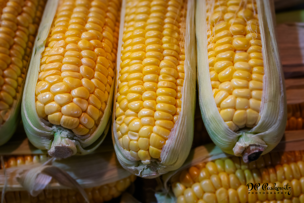 DonP B2 Sweet Hungarian Corn