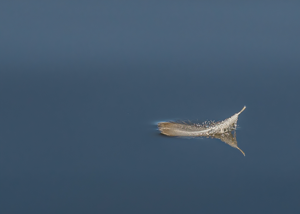 AnnieB Floating Feather