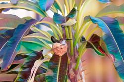 Diane N BrokenBits-NeonRise