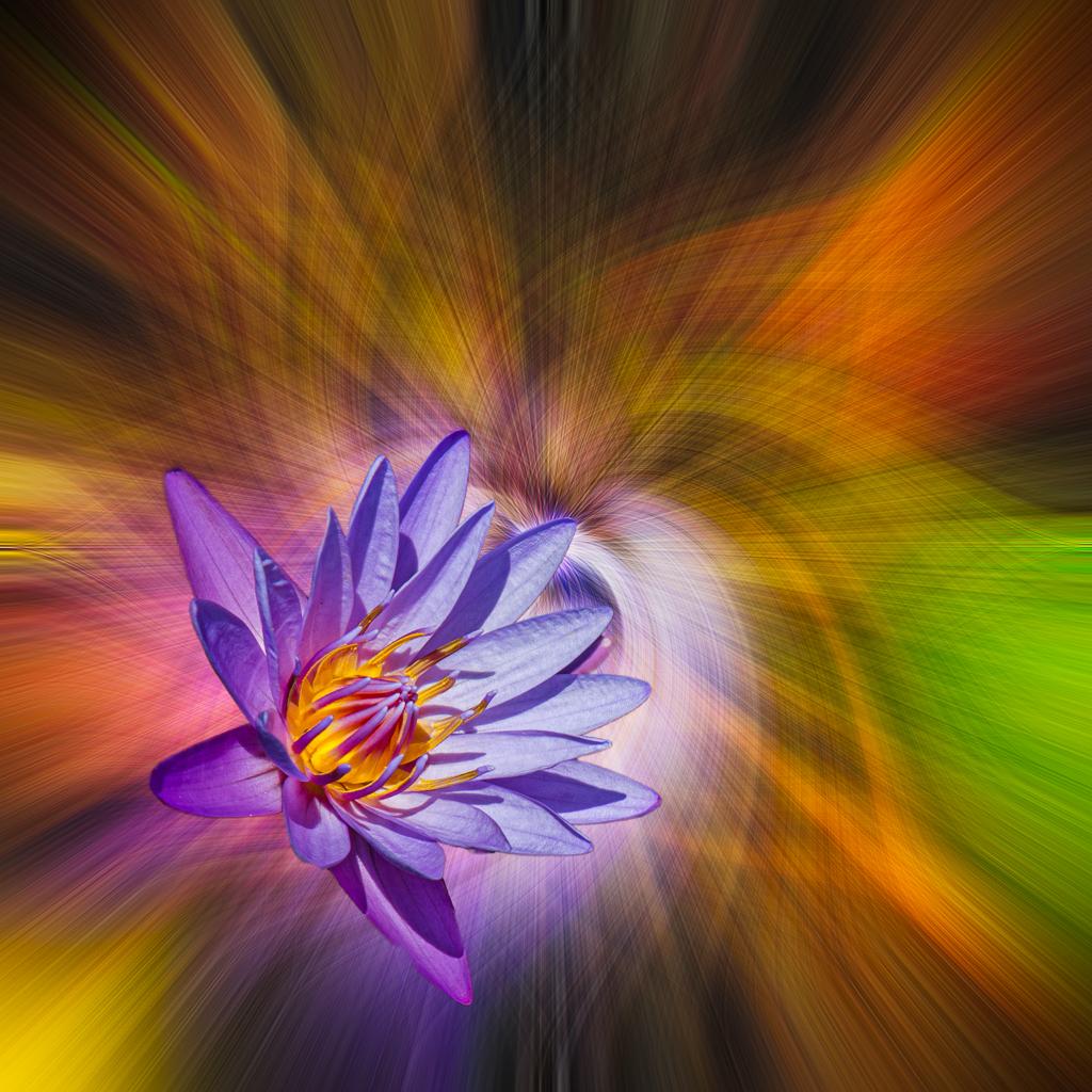 DonP - Water Lily Twirl Study No. 2