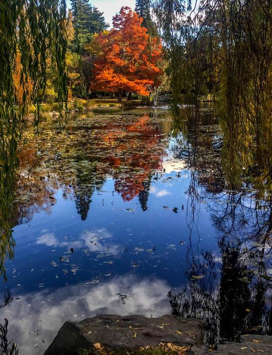 MarcS-Fall in New Zealand