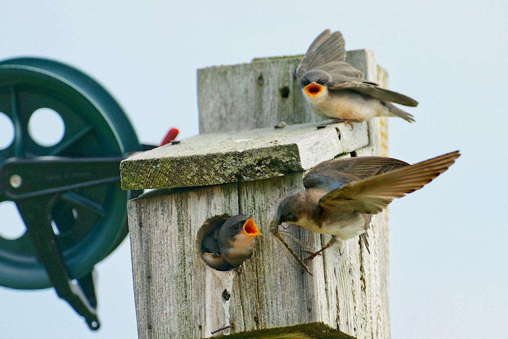 GrahamJ-Pecking order
