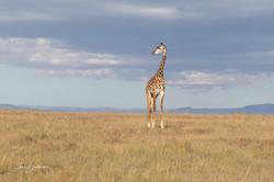 AnnieB.Giraffe-2