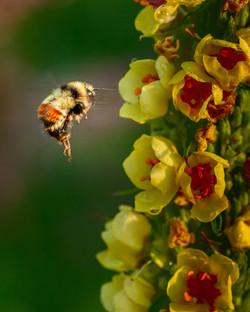NeilM - Bee