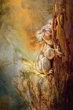 JackyeM_Kangaroo Island