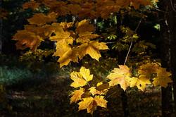 GrahamJ-Autumn