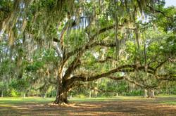 JimS  The Tree