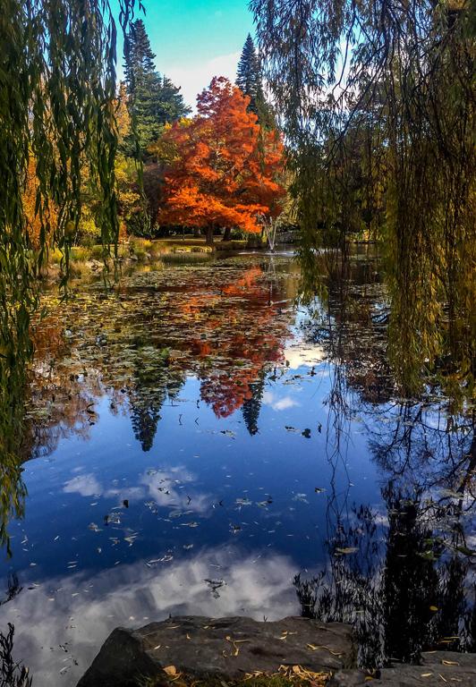 MarcS-NZ Fall Garden