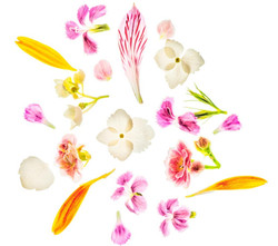 GailS - Flowers