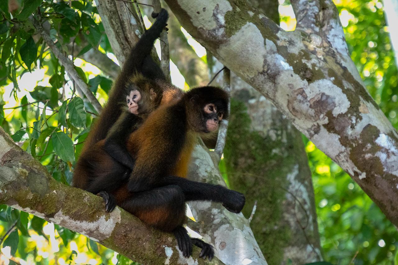 GailS-Monkeys of Costa Rica