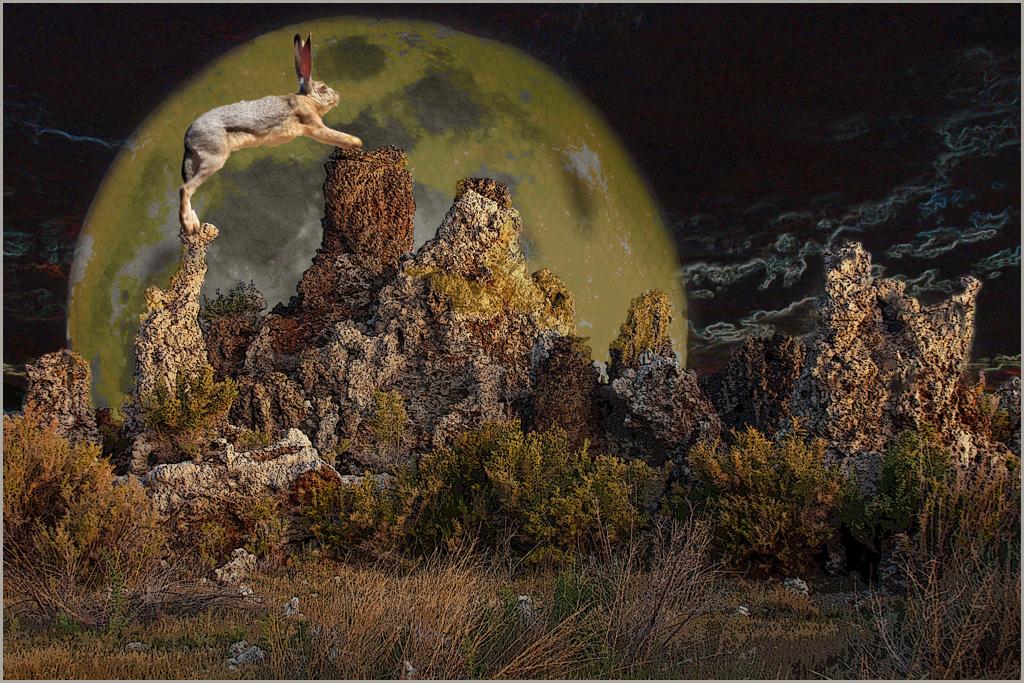 DianaE_A New Moon Rising