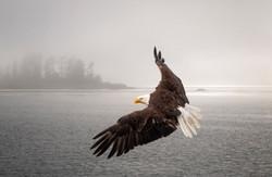 JackyeM_Eagle's flight