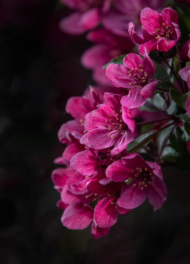 ElaineS-Blossoms