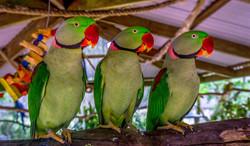 MarcS-Parrot Buddies