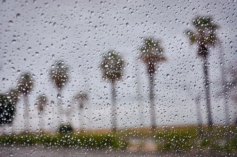 Palmeras en la lluvia.jpg
