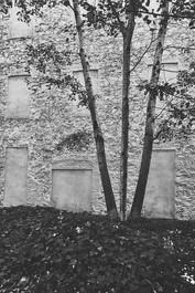 Arboles y muro.jpg