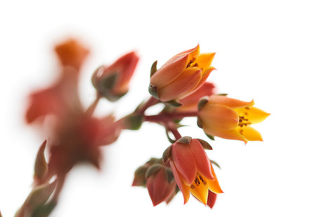 Flores macro 0002.jpg