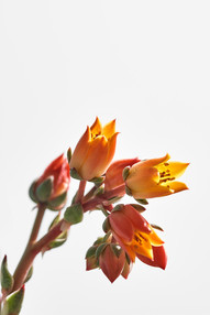 Flores macro 0012.jpg