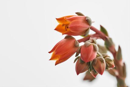 Flores macro 0010.jpg