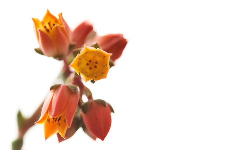 Flores macro 0001.jpg