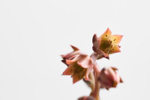 Flores macro 0008.jpg