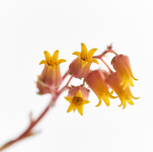 Flores macro 0015.jpg