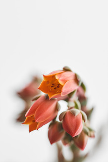Flores macro 0004.jpg
