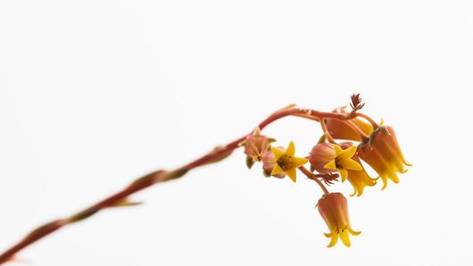 Flores macro 0016.jpg