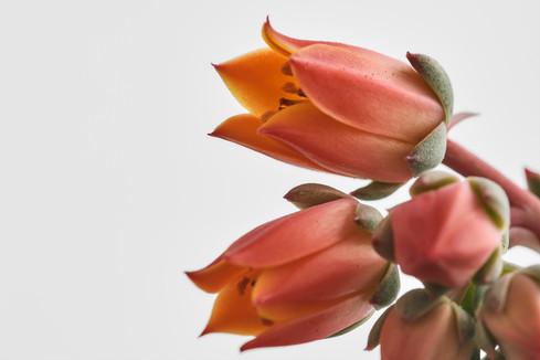 Flores macro 0011.jpg