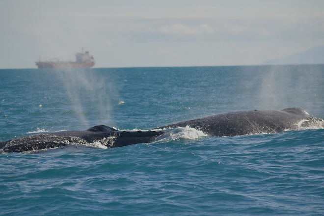 very%20close%20to%20the%20Humpbacks!%20photo%20by%20Ryan%20Chenery_edited.jpg