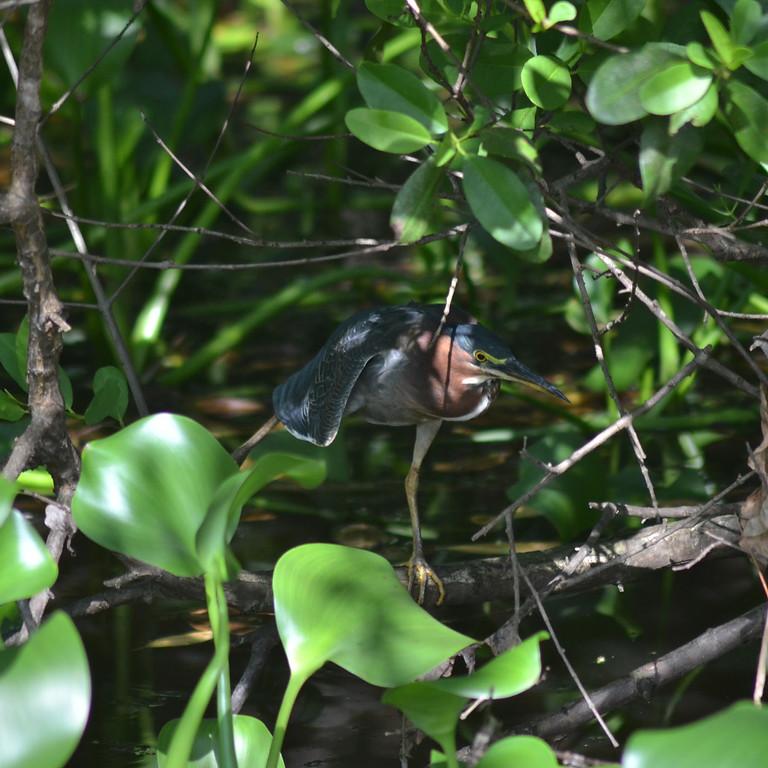 Birds of Yoga I - Heron