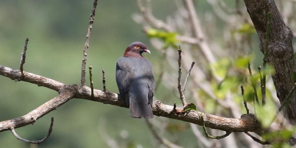 Birds of Yoga II - One-legged King Pigeon Pose