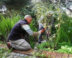 Garden staff training_ It's Rose Pruning Time