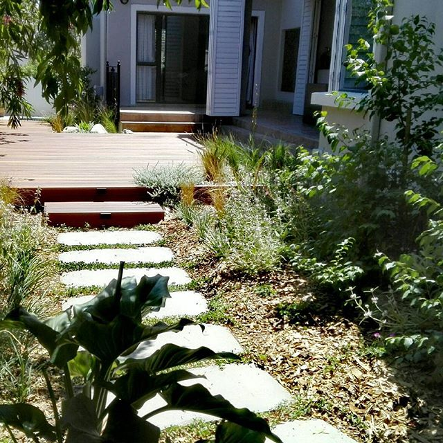 This waterwise garden (greywater only) completed in July is looking So lush! Only the big trees were