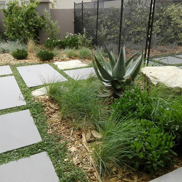 A visit to a 2017 completed garden with the Somerset West Garden club today