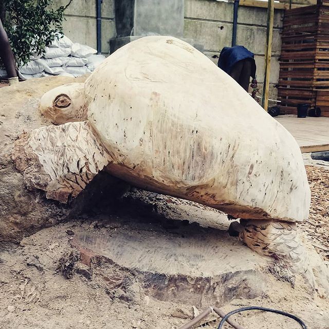 Tortoise sculpture. I love this so much.