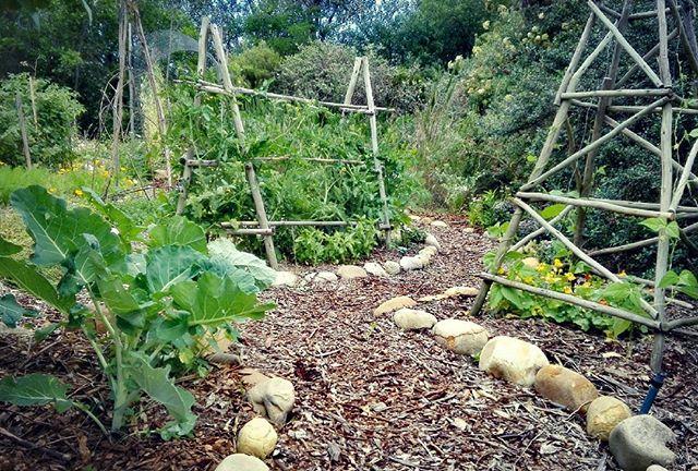 Thrive HQ veg garden