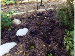 Mulch! The best thing you can do for your garden.