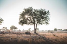 SRG_Jaisalmer-20.jpg