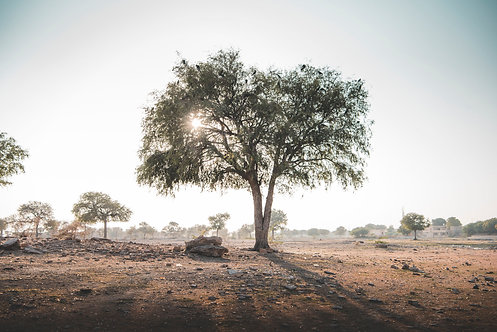 Wishing Tree, Jaisalmer Desert