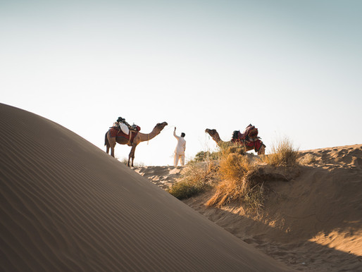 The Camel Safari, A Moral Dilemma