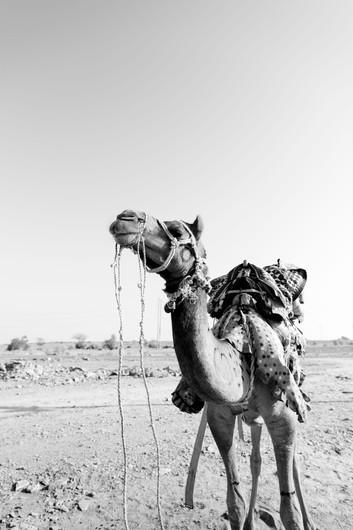 SRG_Jaisalmer-163.jpg
