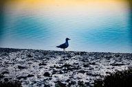 Hiking and Yoga near Brighton seagull