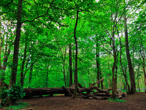 Forest bathing at stanmer park